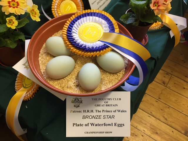 Reserve Eggs & Best Plate Waterfowl